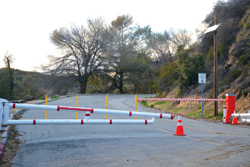 Friends of Griffith Park created a petition to make sure Mt. Hollywood Drive stays closed. (photo by Patricia Sanchez)