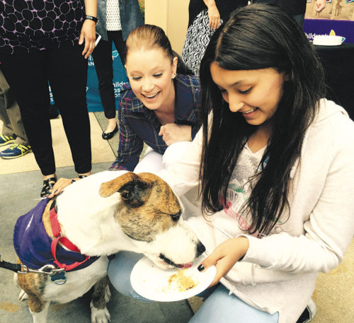 Patients at Children's Hospital Los Angeles benefit from a program that brings dogs into the hospital to raise spirits. (photo courtesy of CHLA)