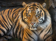L.A. Zoo: Lions and tigers and bears…Tasmanian devils too!