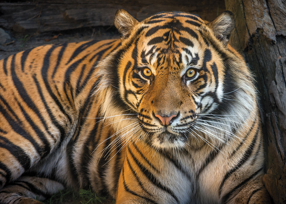 L.A. Zoo: Lions and tigers and bears...Tasmanian devils ...
