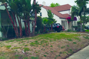 Angelenos will continue to see brown lawns or drought-resistant landscaping as the city prepares for three more years of dry weather. (photo by Gregory Cornfield)