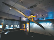 NHM explores diversity of flying pterosaurs