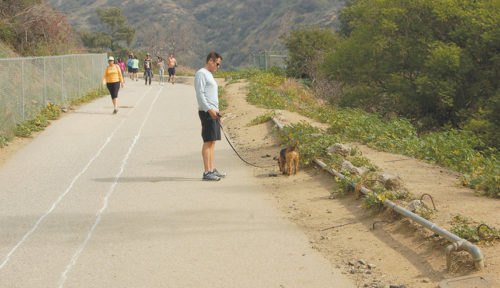 Hikers and dog owners will return to Runyon Canyon next week when the park reopens after a four-month closure to repair a water pipe. (photo by Gregory Cornfield)
