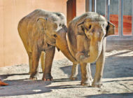 Zoo presents special activities on 'World Elephant Weekend'