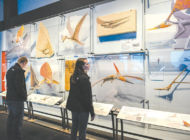 See the pterosaurs exhibit before it takes flight