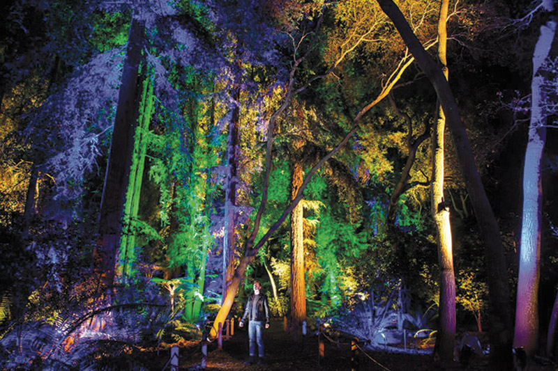 Enchanted Forest At Descanso Gardens In La Ca Ada Lights