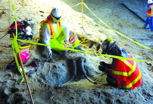 A 3-foot segment and other fossils from the Ice Age were discovered recently while Metro crews were digging for the subway station. (courtesy of Metro)
