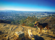 Councilman Ryu runs with Runyon expansion