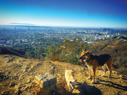 Under the proposal to expand Runyon Canyon Park, Los Angeles would set approximately 5 acres aside for recreational use, and set 10 acres for open green space. (photo courtesy of Friends of Runyon Canyon)