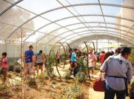 Butterfly Pavilion's makeover