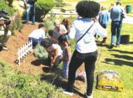 Hancock Park Elementary joins Earth Day garden-planting party