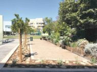 Asphalt makes way for greenspace at Koreatown School