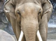 California Supreme Court invalidates ruling on elephant treatment at L.A. Zoo