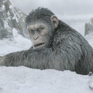 "Caesar (Andy Serkis) returns in ""War for the Planet of the Apes."" (photo courtesy of 20th Century Fox Pictures)"