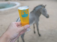 Find music, beer, animals and fun at 'Brew at the zoo'