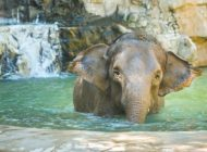 New elephant doesn't alter Koretz's plan to have male pachyderm moved