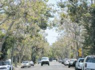 Mid City West Community Council will canvass Rosewood Ave. to find tree caretakers