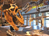Enjoy Jurassic fun at  Dino Fest this weekend