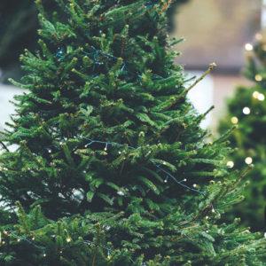 photo courtesy of mr jingles christmas trees