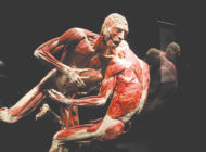 California Science Center explores anatomy  and health with 'Body Worlds' exhibit