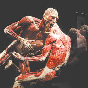 "Guests have a little over a month left to view the ""Body Worlds: Pulse"" exhibit at the California Science Center. (photo © Institute for Plastination 2017)"