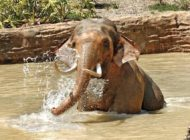 City officials ask for experts to weigh in on zoo elephant's health