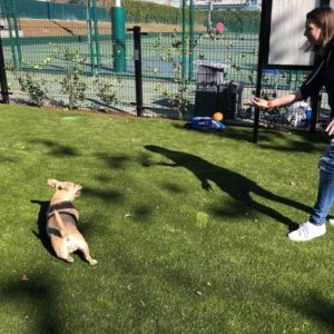 West Hollywood resident Tiffany Phelps and her chiweenie Piper played catch at one of the city's new dog parks. (photo by Crystal Duan)