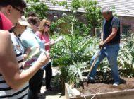 'Grow LA Victory Garden' teaches gardening skills