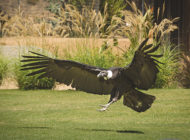 Learn about vultures and honor Fleet Week at the L.A. Zoo