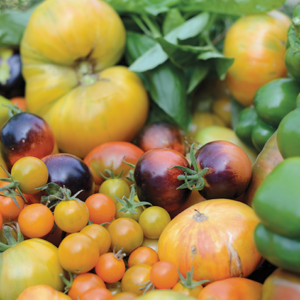 Heirloom tomatoes are grown in the garden. (photo courtesy of the Parkway Grill)