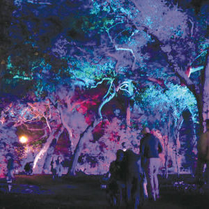 The Forest of Light at Descanso Gardens is on display now through Jan. 6, 2019. (photo courtesy of Descanso Gardens)