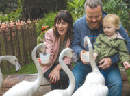 Mingle with the flamingos at the L.A. Zoo