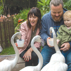 A new program at the Los Angeles Zoo allows guests to get up close and personal with flamingos. Up to six guests at a time will get to enter the flamingo habitat and hand-feed the colorful birds. (photo by Jamie Pham/GLAZA)