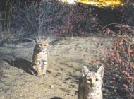 NHM book explores urban flora and fauna