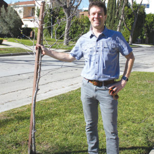 Conrad Starr, president of the Sycamore Square Neighborhood Association, posed with one of the new trees planted on Orange Drive, south of Wilshire Boulevard. (photo courtesy of Julie Stromberg)