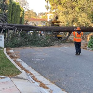 A tree fell along Tower Road in Beverly Hills as a result of the heavy winds that hit the area on April 9. (photo courtesy of Harvey Englander)