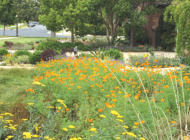Tour drought-tolerant gardens with the Greater Wilshire Neighborhood Council