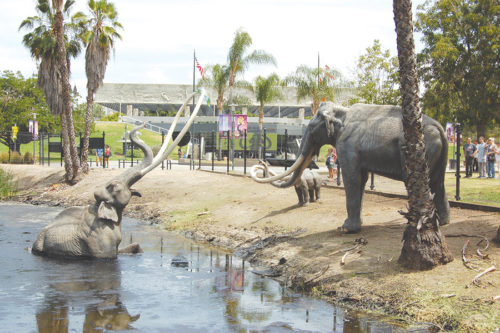 Plans are currently being formulated for the La Brea Tar Pits and Museum site, which will undergo a transformation in the coming years. (photo by Edwin Folven)