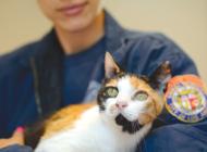 'Catapalooza' at city shelters links felines with families