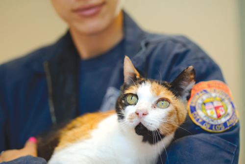 A special adoption event is being held this weekend to help alleviate the large number of cats and kittens in city animal shelters. (photo courtesy of L.A. Animal Services)