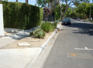 New planting rules  for WeHo parkways