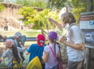 Live on the wild side – become  a docent for the L.A. Zoo