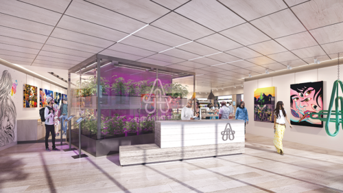 The Artist Tree will grow cannabis plants in its retail store, which will also feature local artists. (rendering courtesy of the Artist Tree)