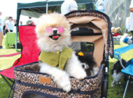 'Woofstock 90210' celebrates furry friends