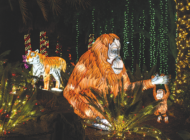 Holiday festivities shine brightly during annual 'Zoo Lights' program