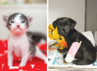 Program allows the public to give foster homes to pets
