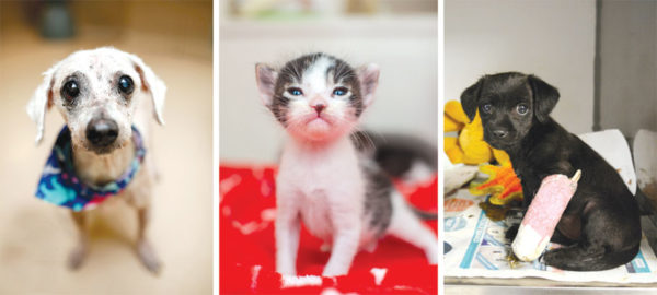 "People can serve as ""foster parents"" to shelter animals, with the hope of helping them along their way to permanent homes. (photo courtesy of Los Angeles Animal Services)"