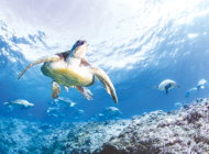 Science center opens IMAX film on sea turtles