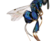Bugs takeover the Natural History Museum online