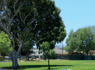 WeHo Park project may be completed in 2021